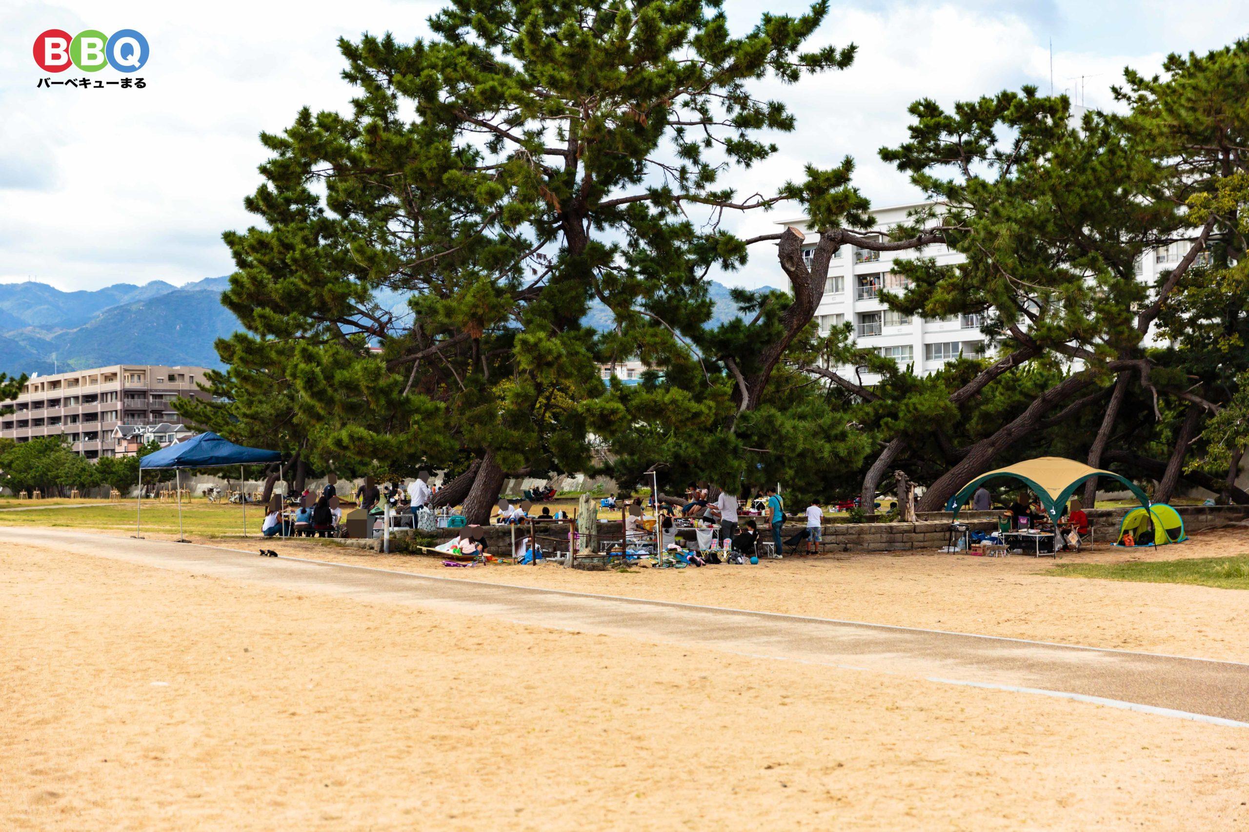 御前浜の小径(遊歩道)と防波堤の間にある木陰エリア